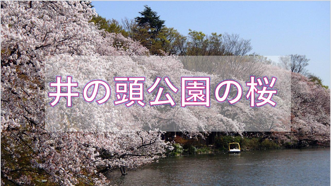 2021 桜 見頃